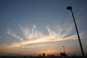 鳥と夕日と電灯と