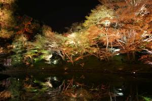 高台寺「夢鏡」池に写る木々も注目