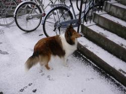犬は喜び・・・じゃなくて寒そう?